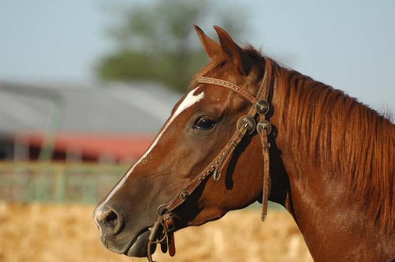 Você já parou para pensar, sobretudo, se dá  a devida importância quando seu cavalo sente dor? Pessoas e cavalos são parecidos nesses aspectos