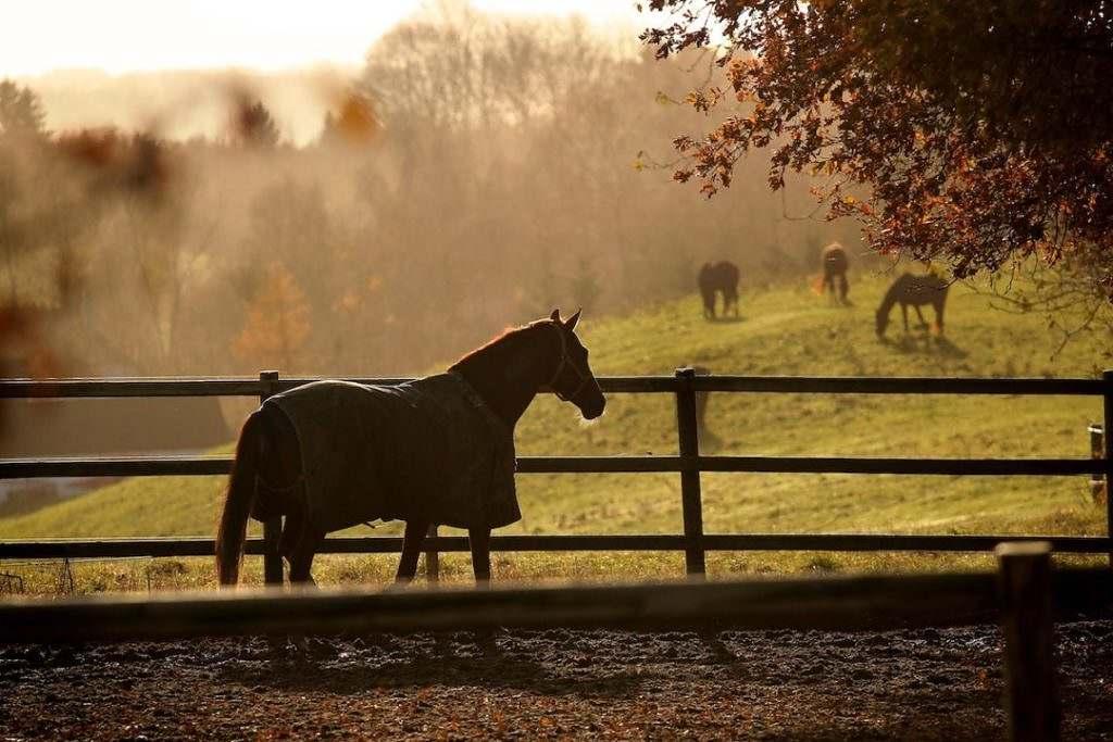 proprietário de cavalos: se você está ai pensado em como fazer as suas contas com os cavalos fecharem, presta atenção nesse texto