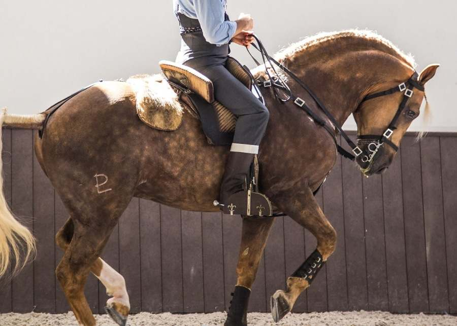 Paulo Junqueira conta sobre como cavalgar em diferentes países é uma ótima oportunidade para conhecer diferentes tradições equestres