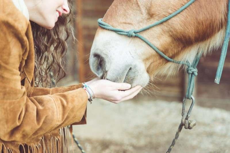 cavalos ficam doentes: á algumas maneiras de transmissão de microorganismos - como bactérias, vírus, fungos, parasitas - para os cavalos