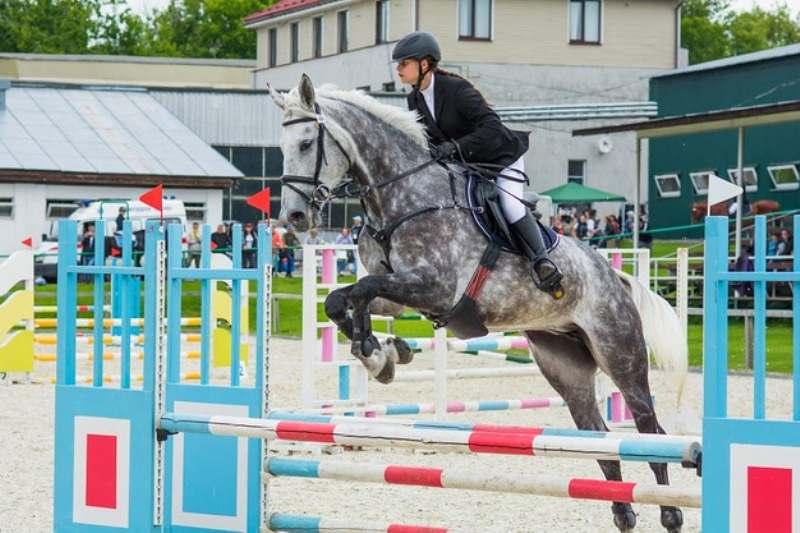 Glicina atua na estrutura muscular em cavalos atletas: suplementar com glicina poder ofertar diversos ganhos de energia e de massa muscular