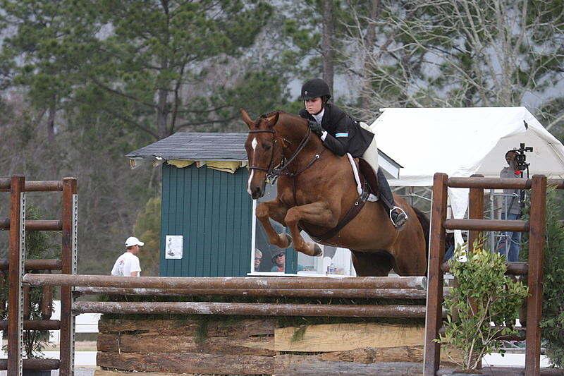 Utilizado para fins agrícolas e militares, Hanoverian horse foi refinado até tornar-se uma das mais procuradas para esportes equestres,