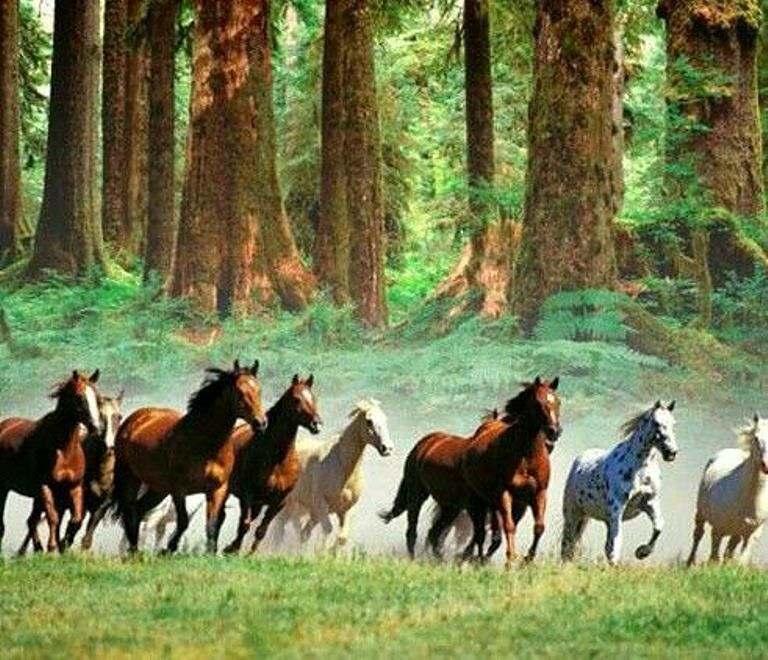 éguas em uma manada de cavalos: quem fala do assunto é Flávia de Oliveira Ramos, formadora de líderes no mundo corporativo Brasil afora