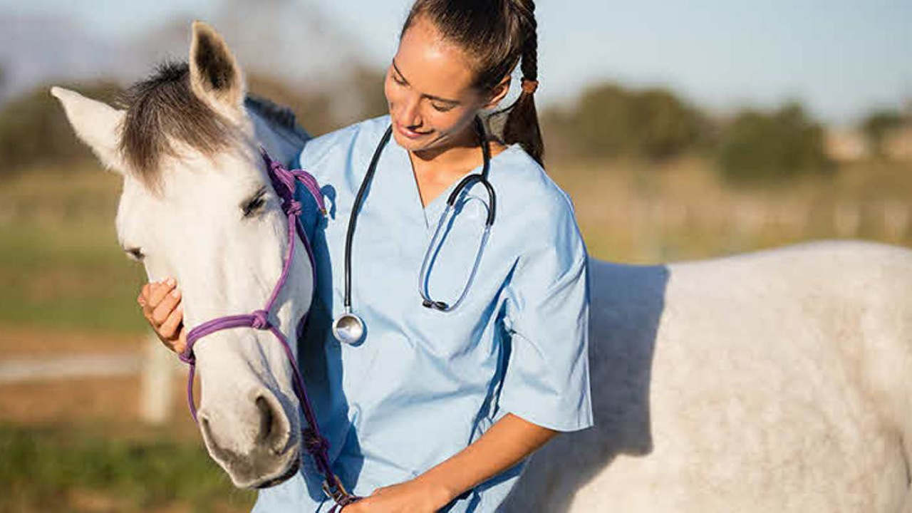 ABRAVEQ realiza XXI Conferência anual para veterinários