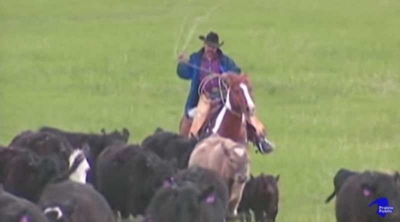 Ranching Perspectives: o documentário foi exibido pela primeira vez em 2013 e conta a história por trás da tradição pecuária em South Dakota