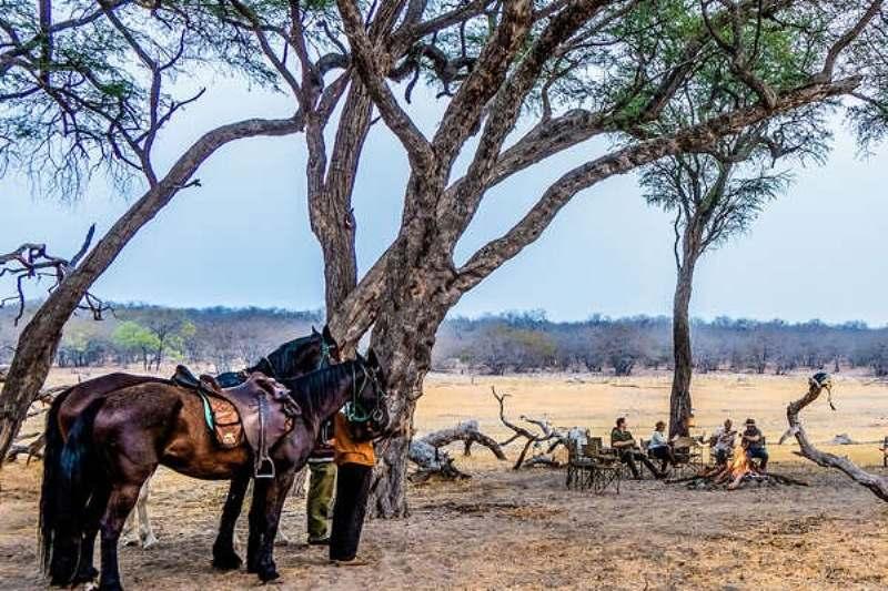 Paulo Junqueira continua sua viagem pelo Zimbábue, na segunda parte desse relato; elefantes, caçadores clandestinos; raça sul-africana