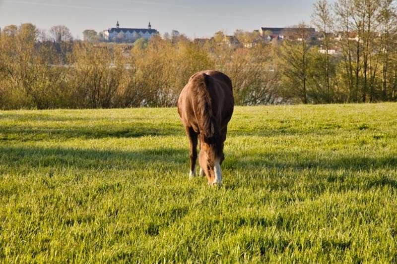Uma suplementação mineral bem feita pode auxiliar no cotidiano de cavalos de esportes, provas de resistência, trabalho e até lazer