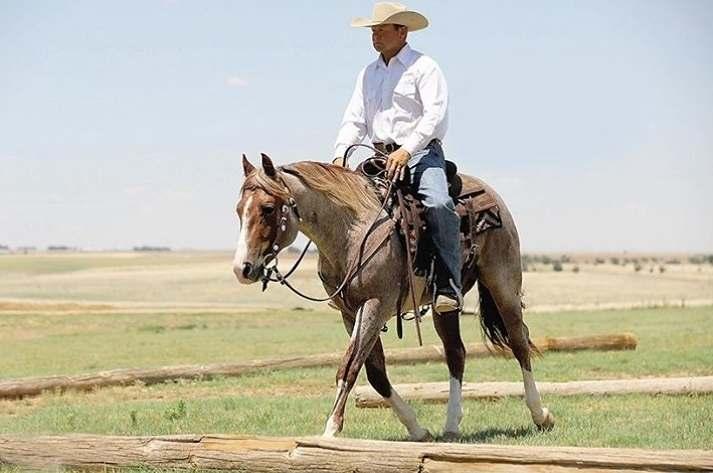 Só para não deixar dúvidas: rédeas são a correia presa à embocadura do cavalo na qual o cavaleiro segura as mãos para controlar a boca dele