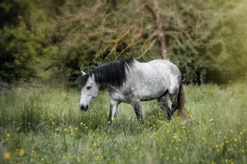 Luciano Rodrigues, cavaleiro e pesquisador, comenta nesse artigo sobre medo e trauma com os cavalos e como é importante entendê-los