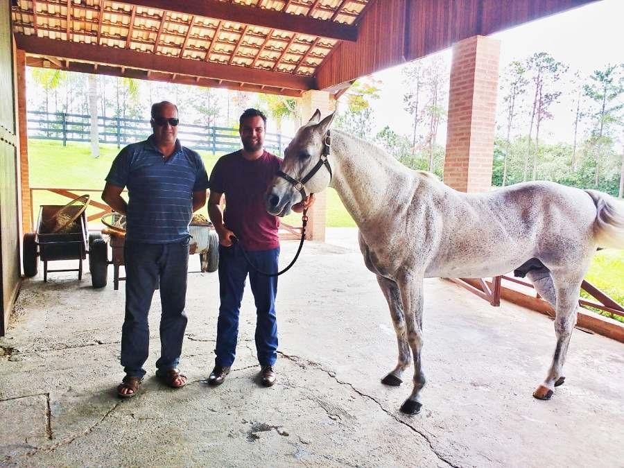 Luciano Rodrigues, cavaleiro e pesquisador, comenta nesse artigo sobre como o cavalo tem o poder de unir pessoas; inspirado no Roxão
