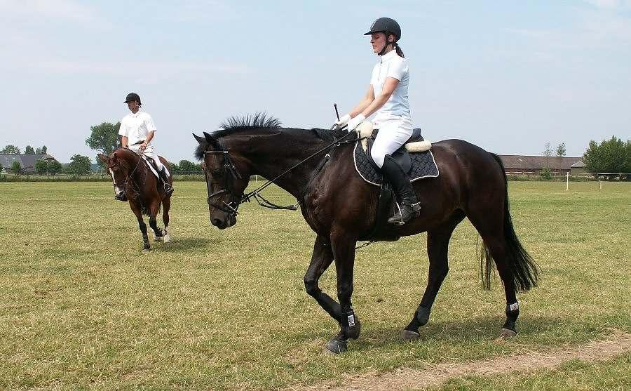 Entre as virtudes de um bom cavaleiro, devemos nos ocupar com as coisas positivas que nossos cavalos fazem e não somente nos 'pré' ocuparmos