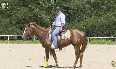 Quando seu cavalo dispara: Seu cavalo disparou com você e agora? Nesse vídeo Aluisio Marins te conta tudo e mostra como se comportar