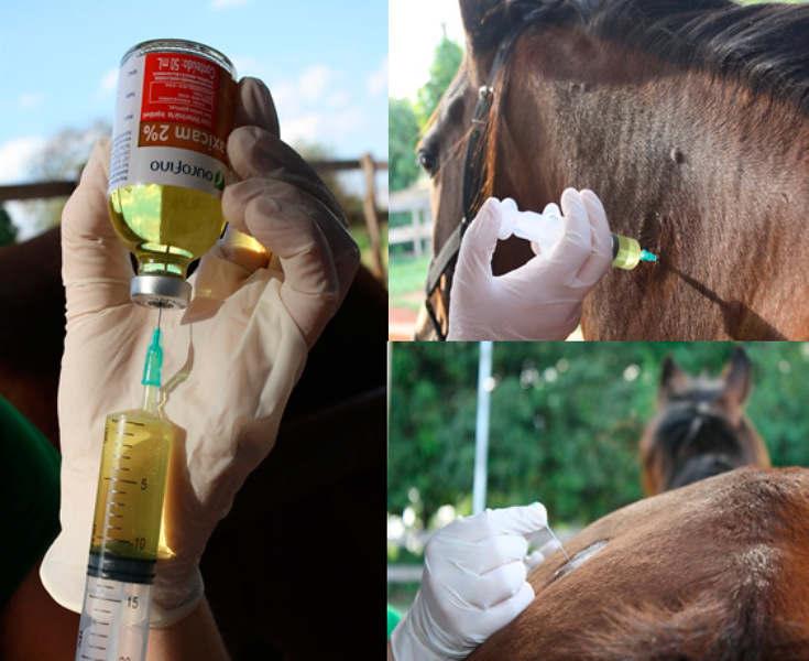 Administração de medicamentos: fique de olho em alguns cuidados básicos essenciais no manejo de medicamentos no trabalho diário com equinos