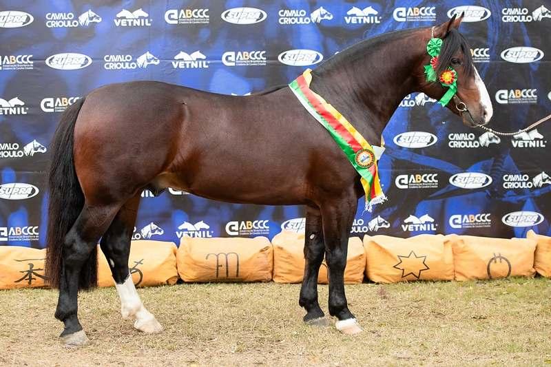 Conhecida como referência em criatórios da raça, Bagé/RS provou, mais uma vez, que é um dos berços de peso do Cavalo Crioulo na Morfologia