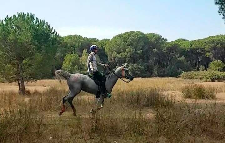 O Mundial de Enduro Equestre acontece dia 22 de maio, em Pisa, na Itália, com a participação de 13 países; Brasil está na 'briga'
