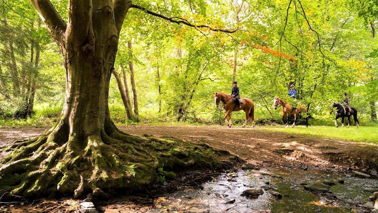Cavalgada e Cultura Equestre – Escócia