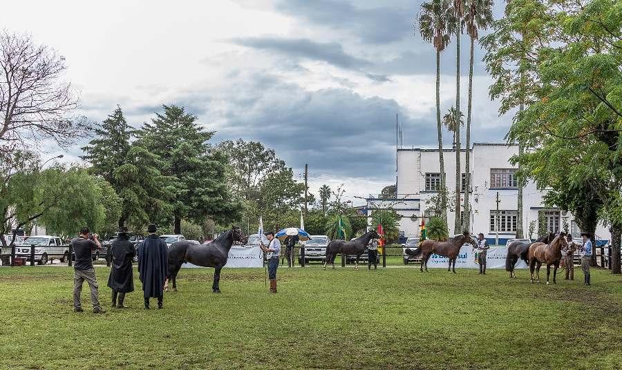 Cavalo Crioulo: Bagé, Esteio e Ponta Grossa reuniram mais de 370 animais em provas no final de semana; Bagé receberá etapa da Passaporte