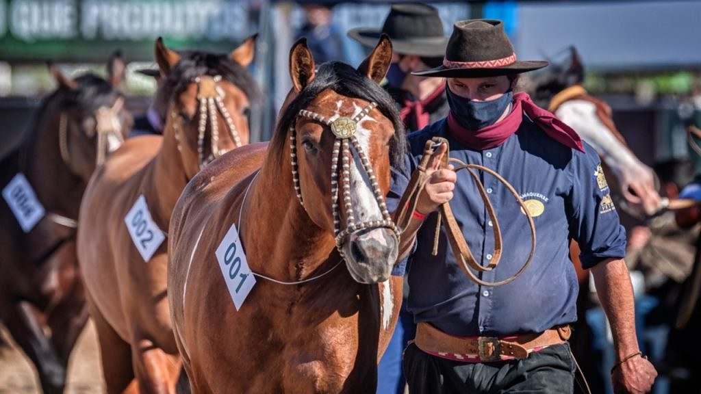 provas do cavalo Crioulo, Outonal e Credenciadoras, voltam a Esteio/SP; serão transmitidas ao vivo e com acesso restrito ao público