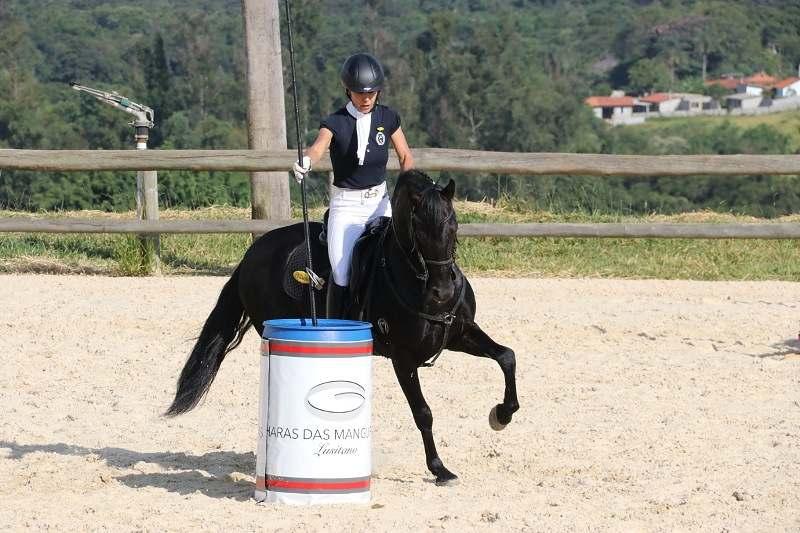 Ranking Brasil Virtual Maripá de Equitação de Trabalho será realizado em três etapas com participação de conjuntos de todo o País