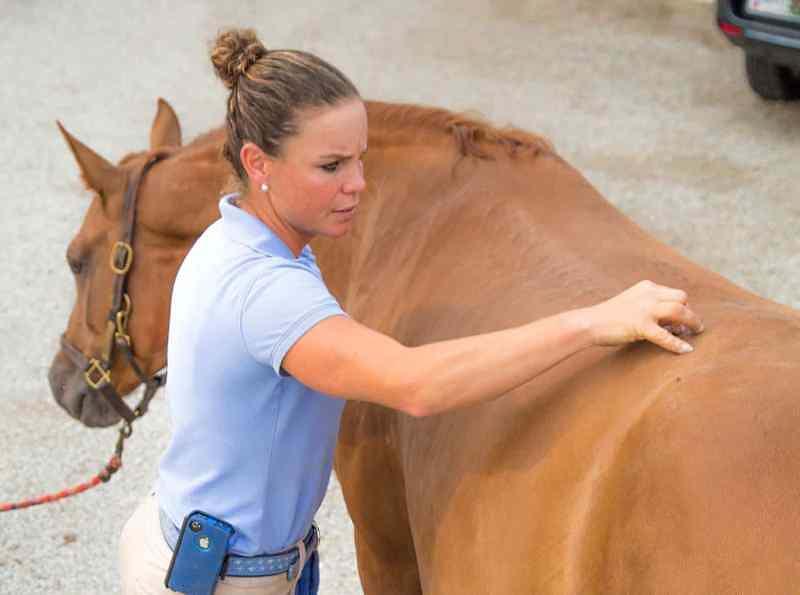 O dorso equino desempenha um papel fundamental na morfologia devido à sua função como elemento de suporte da caixa torácica, peso abdominal