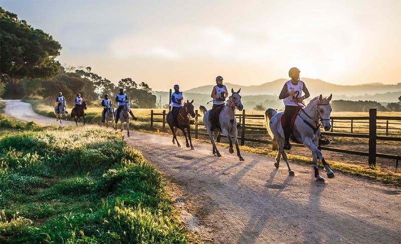 Enduro Equestre: com resistência e velocidade, nada mais é do que uma corrida de longa distância a cavalo, com percursos em distâncias
