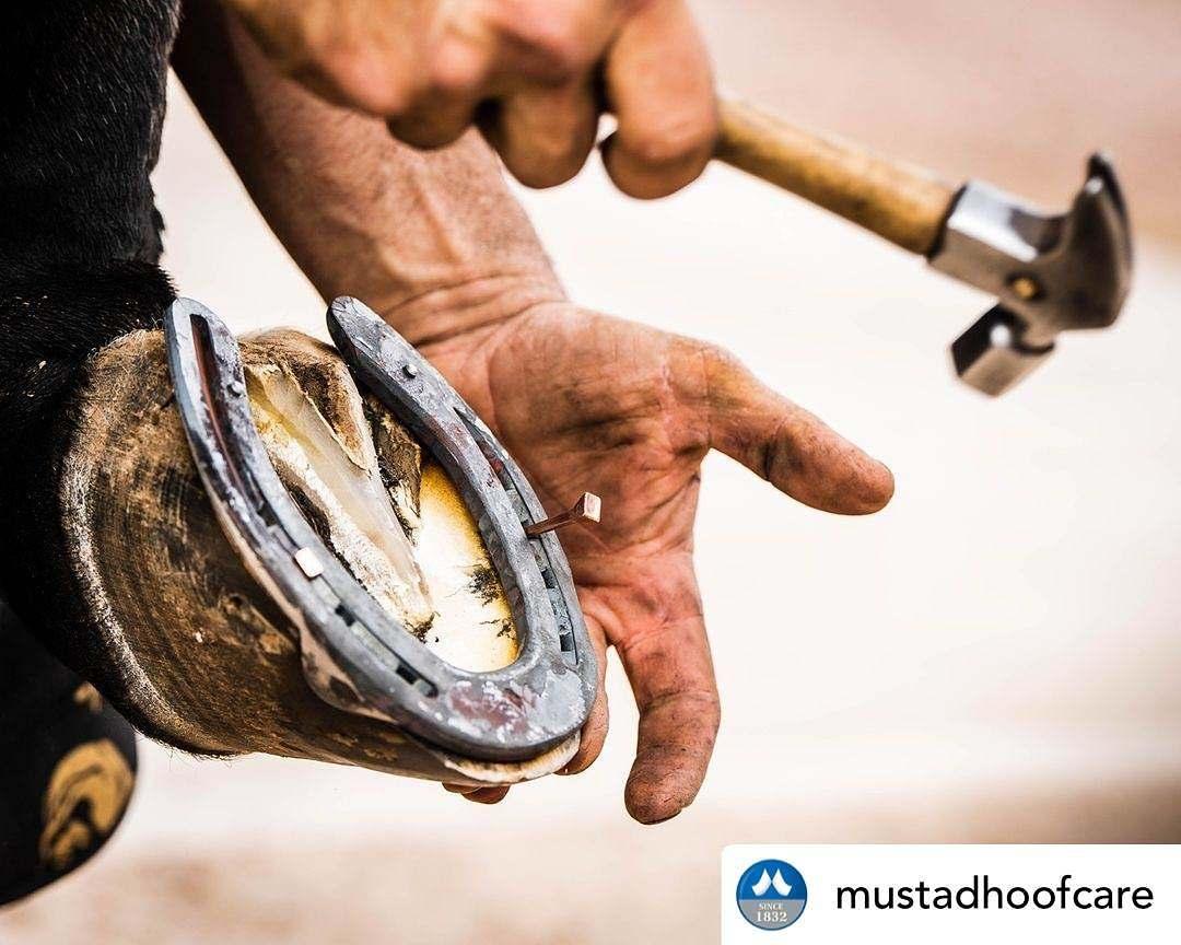 Mustad Brasil é líder no segmento de cuidados para cascos de cavalos