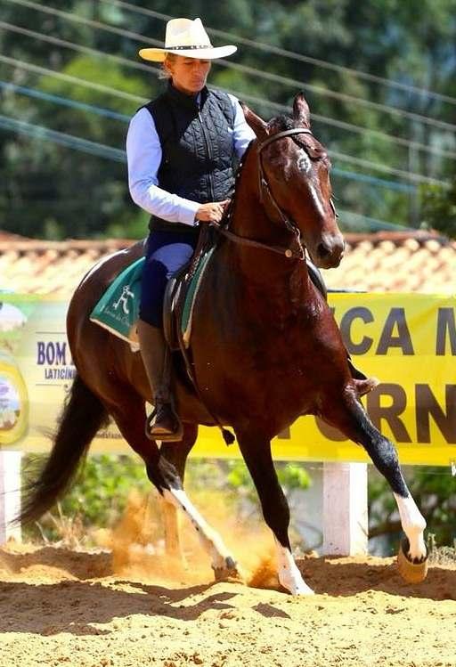 Dalva Marques, em sua coluna da semana, dá dicas preciosas de como comprar um cavalo do alto dos seus 35 anos como cavaleira, treinadora