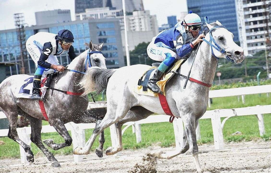 exemplares da raça Árabe: Ao todo, seis machos com até uma vitória, participarão neste sábado do páreo promovido pela ABCCA