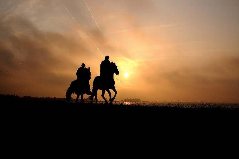 treinamento do cavalo: o bem-estar humano e do cavalo depende da metodologia de treinamento e manejo que demonstrem e isso é muito importante