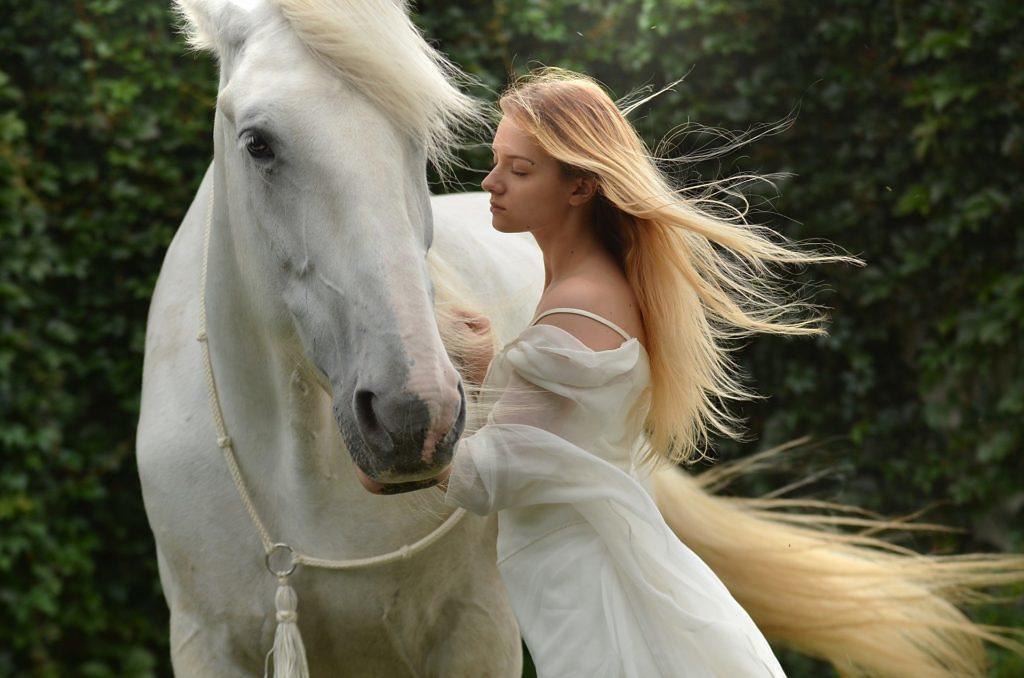 15 curiosidades sobre cavalos