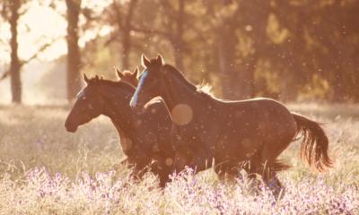 15 curiosidades sobre os cavalos