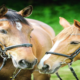 Foco em bem-estar, qualidade de vida e aumento da população de cavalos urbanos movimentam o mercado equestre