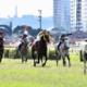 GP do Cavalo Árabe homenageia um dos maiores incentivadores da Corrida da raça no Brasil