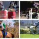 Programa do Cavalo Árabe traz novidades para os amantes dos esportes com a raça