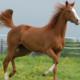 Saiba o porquê a nutrição é fundamental para elevar performance de cavalos de competição