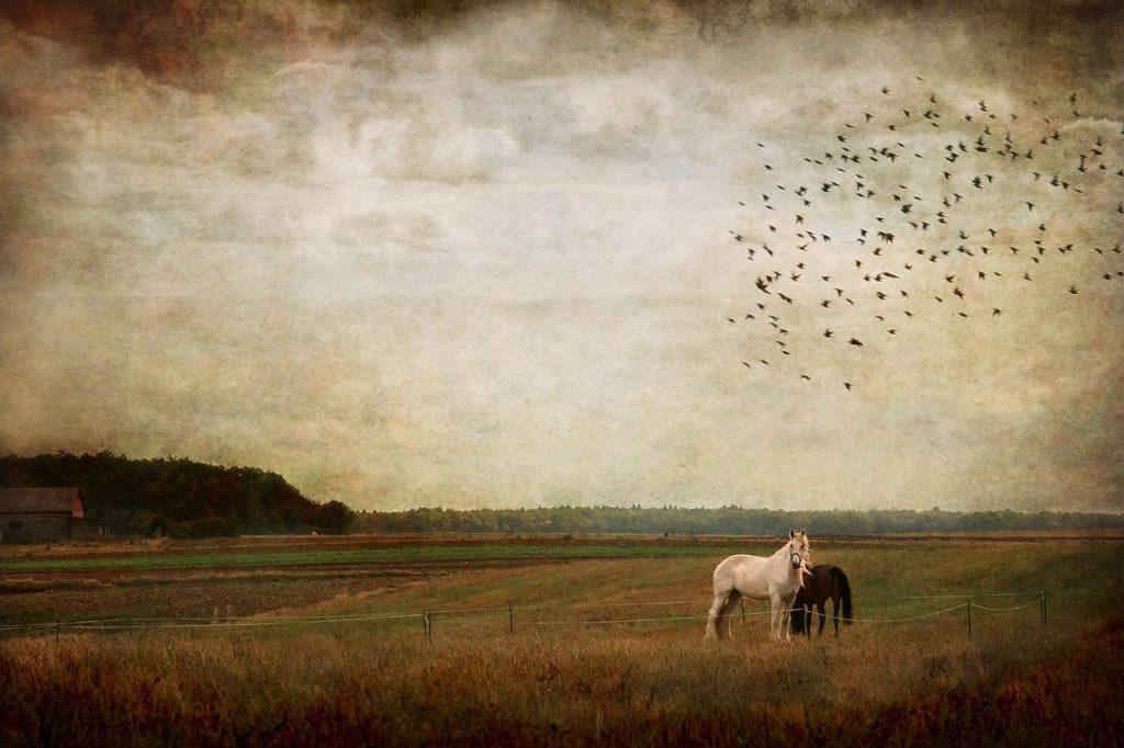 Treinamento de cavalos: Luciano Rodrigues, cavaleiro e pesquisador, comenta nesse artigo sobre o entendimento dos fundamentos do cavalo
