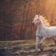 Treinamento de cavalos entendendo os fundamentos dos animais