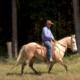 Nesse vídeo da TV UC, Aluisio Marins explica sobre a necessidade exercício para ter um cavalo de cavalgada macio e leve de boca