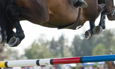 'Animais atletas recebem cuidados especiais nas Olimpíadas', revela especialista