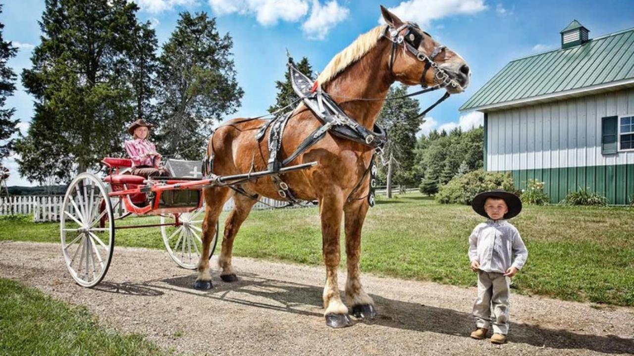 Big Jake, cavalo mais alto do mundo, morre aos 20 anos