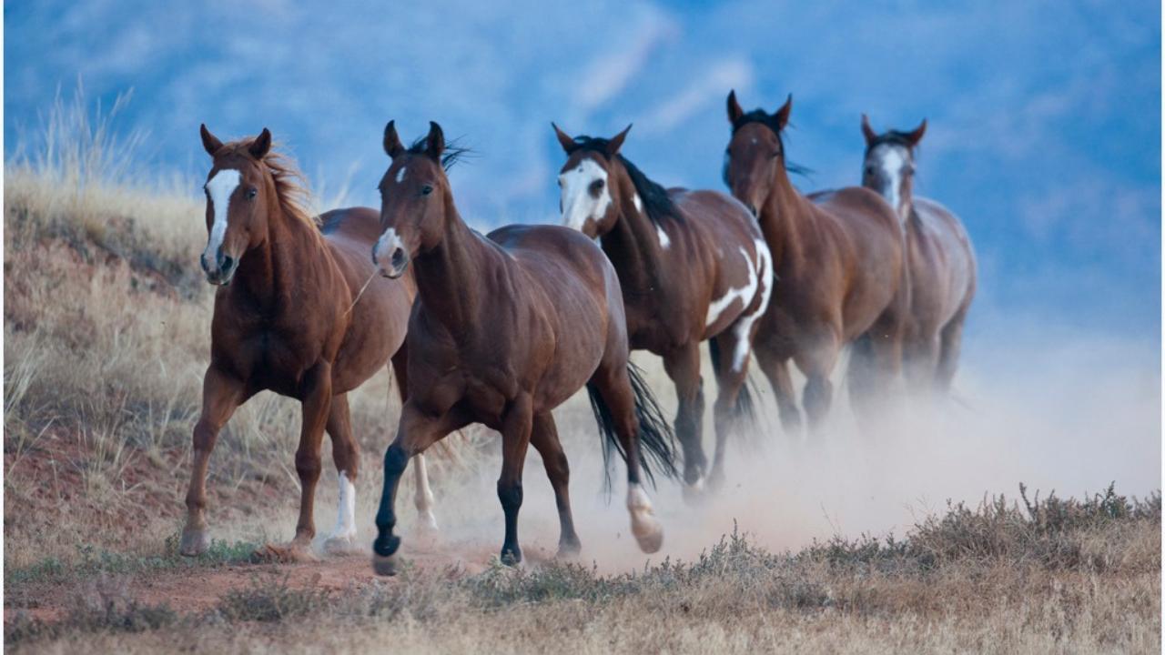 Cavalgada em Mustangs no Wyoming