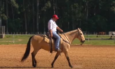 Cavalo que dispara ou pula ao galopar