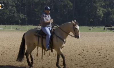 'Cavalo ruim de boca' pode estar relacionado a outros fatores e quase nada com a boca