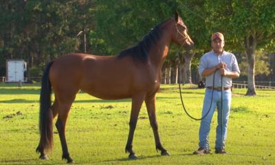 Como apresentar situações novas para cavalos