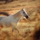 Confira 10 curiosidades sobre os cavalos