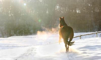 Confira quatro dicas para o seu cavalo ter um inverno melhor