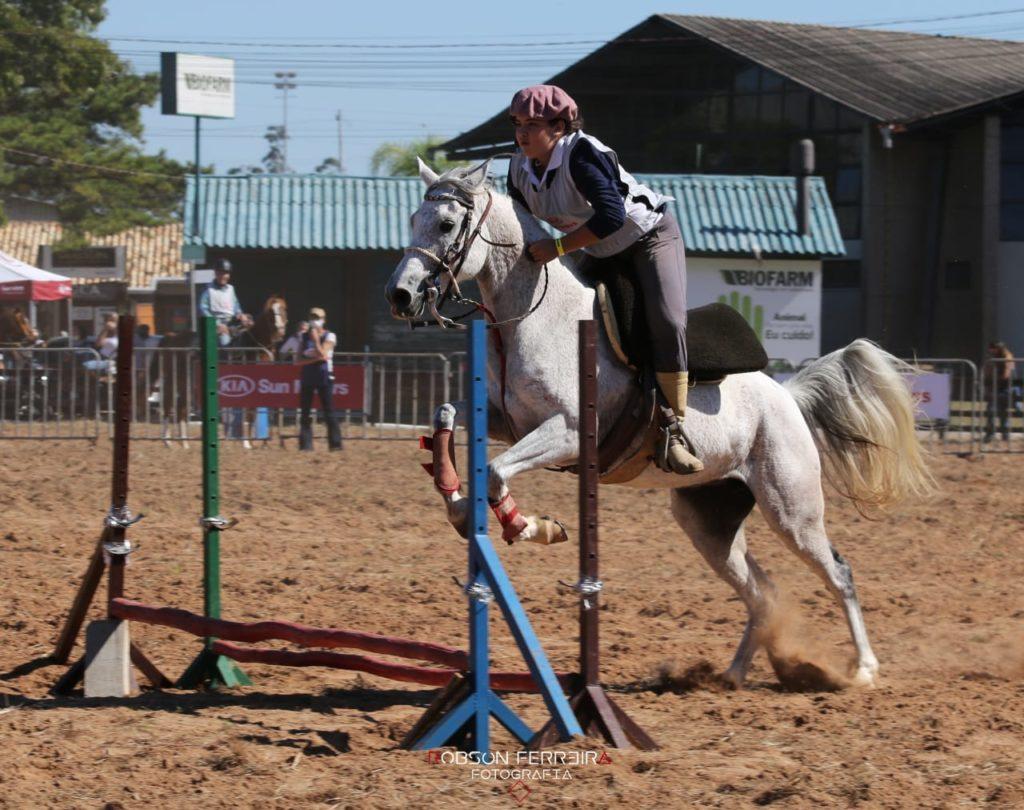 Criação gaúcha do cavalo Árabe enaltece a funcionalidade da raça