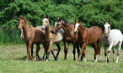 Doenças respiratórias são mais presentes no inverno, prejudicando o desempenho de equinos