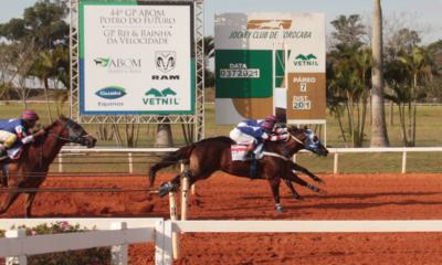 Jockey Club de Sorocaba tem campeões do GP ABQM Potro do Futuro e Rainha da Velocidade