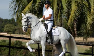 Live Rocas do Vouga apresentará história do haras e sua criação de cavalos Puro Sangue Lusitano